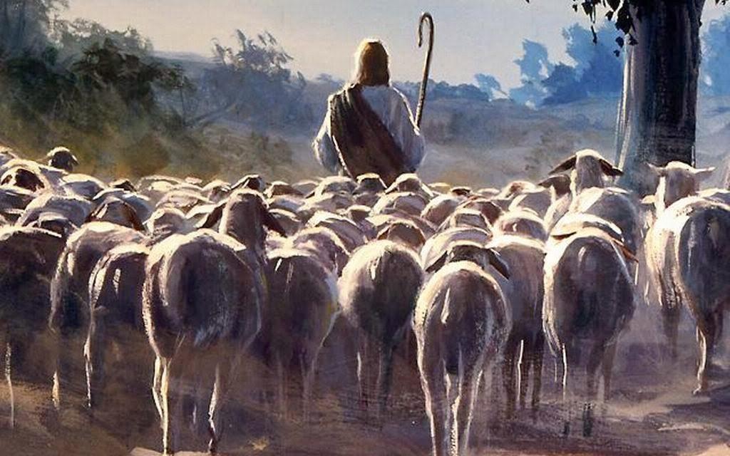 Free sheep under the true Shepherd